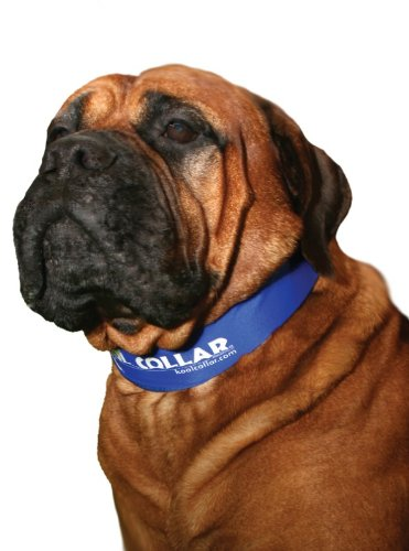 Cooling Collar for Dogs