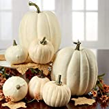Factory Direct Craft Package of 7 Harvest Off White Artificial Pumpkins Assortment for Halloween, Fall and Thanksgiving Decorating
