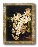 White Orchid Flowers In Vase Floral Wall Decor Art Print Poster (16x20)