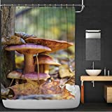 C COABALLA Family of Mushrooms Shower Curtain,172746 with Hooks,36''W x 72''H