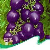 super1798 Tomato Seeds Purple Cherokee Cherry Black Red Yellow Blue Zebra Tomato Plant - 37
