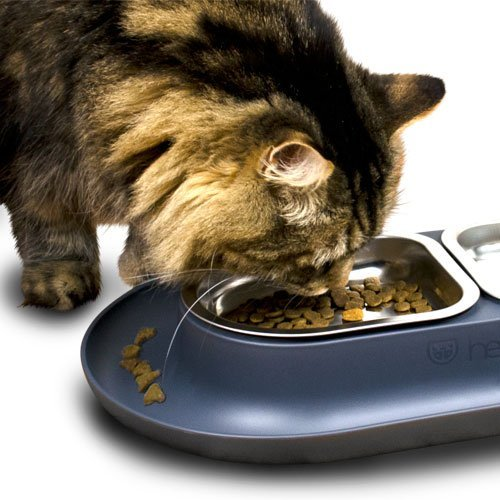 Hepper - Nomnom Modern Cat Bowl - Whisker Friendly + No Spill - Stainless Steel Pet Food and Water Dish for Cats, Dogs, and Small Pets 1