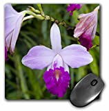 """3dRose Martinique, West Indies. Bamboo Orchid, Balata Garden Mouse Pad, 8"""" x 8"""" (mp_74045_1)"""