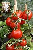 Summer Sweet Cherry Tomato Tomato 150 Seeds by Jays Seeds UPC 650327337497 + 1 Free Plant Marker