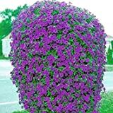 Beautiful Purple Wave Petunia Seeds (30+ seeds) Comb.S/H!
