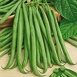 """170 Seeds, Bush Bean""""Topcrop"""" (Phaseolus vulgaris) Seeds by Seed Needs"""
