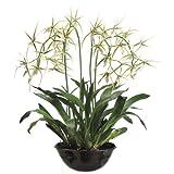 Silk Décor Brassia Plant in Terracotta Pot, 32-Inch, Green