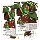 Seed Needs, Chocolate Habanero Pepper (Capsicum chinense) Twin Pack of 60 Seeds Ech Non-GMO