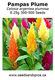 Pampas Plume (Celosia argentea plumosa) 0.25g 300-500 Seeds Variety of colors.