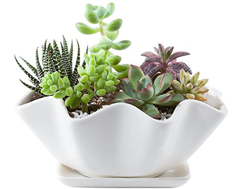 Mkono-6-Inch-White-Ceramic-Succulent-Plant-Pot-with-Saucer-Modern-Cactus-Planter-Decorative-Planting-Bowl-with-Drainage-Hole