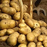 Simply Seed - 5 LB - Kennebec Potato Seed - Non GMO - Organic Grown - Order Now for Spring Planting