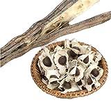 Trenton 50Pcs Organic Moringa Oleifera Seeds Health Skin Benefits Drumstick Tree Seeds