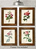 Paris Botanicals - Set of Four Photos (8x10) Unframed - Makes a Great Gift Under $20 for Bedroom/Bathroom Decor