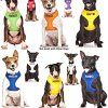 Dexil Limited Adopt ME (I Need A New Home) Yellow Color Coded Non-Pull Front and Back D Ring Padded and Waterproof Vest Dog Harness Prevents Accidents by Warning Others of Your Dog in Advance 5