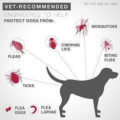 Bayer-K9-Advantix-II-Flea-Tick-and-Mosquito-Prevention-for-Dogs-6-Dose