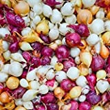 Red White Yellow Onion Sets Sweet Trio Onions Bulb Seed Set Perennial Garden Vegetable Green Plant Bulbs Seeds Permaculture 8 Ounces