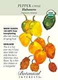 Habanero Chile Pepper - 30 Seeds - Organic