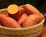 Covington Sweet Potato - #1 Seed Tuber