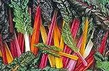 Swiss Chard Seeds,swiss Chard, Rainbow, Heirloom, Organic 100 seeds, Non Gmo