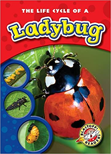 Life Cycle Of A Ladybug The Blastoff Readers Life Cycles Colleen Sexton Full Color Photography 9781600145254 Amazon Com Books
