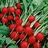 David's Garden Seeds Radish Cherry Belle SL2375 (Red) 200 Non-GMO, Heirloom Seeds