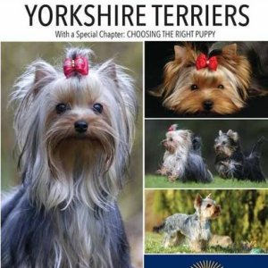 Yorkshire Terriers (Complete Pet Owner's Manual) 4