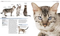 The-Complete-Cat-Breed-Book-Choose-the-Perfect-Cat-for-You-Dk-the-Complete-Cat-Breed-Book