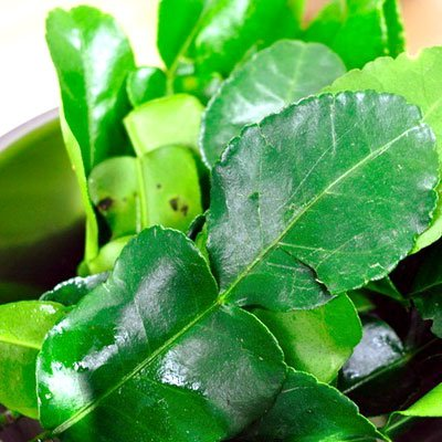 Fresh Kaffir Lime Leaves (Thai Lime Leaves) 1 Oz.