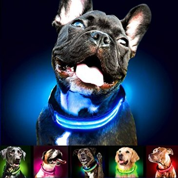 Shine for Dogs Ultimate LED Dog Collar – USB Rechargea