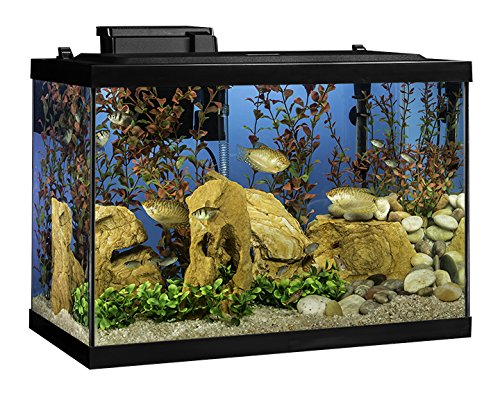 Tetra Aquarium 20 Gallon Fish Tank Kit, Includes LED Lighting and Decor