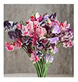David's Garden Seeds Flower Sweet Pea Spencer Ripple Formula Mix SL1807 (Multi) 50 Non-GMO, Open Pollinated Seeds