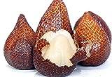 10 salacca/zalacca/Salak/Snake Fruit Seeds Exotic Fruit from Thailand