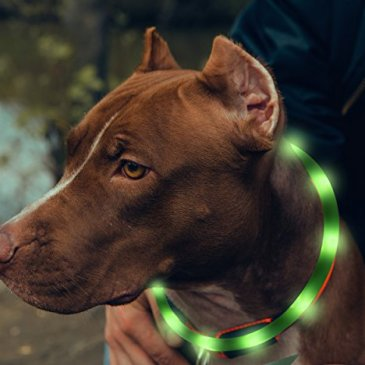 BSEEN LED Dog Collar, USB Rechargeable Light Up Pet Safety C