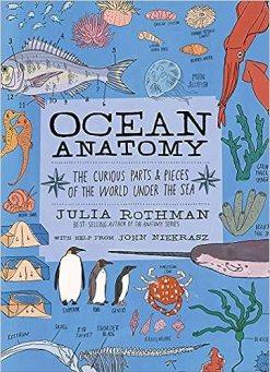 Julia's Rothman Ocean Anatomy