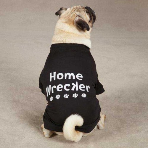 Casual Canine Home Wrecker Pet Tee Shirt - Black 1