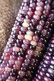 Amethyst Dream Purple Glass Gem Cherokee Indian Corn Heirloom Premium Seed Packet + More