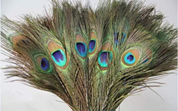 Uphaar-Natural-Peacock-Feather-Mor-Pankh-Real-Peacock-Feather-Tails-for-Home-Decor-Full-Length-Good-Luck-Art-and-Craft-Worship-Pack-of-5-24-Inch