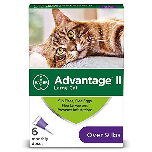 Advantage II Flea prevention