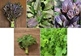 David's Garden Seeds Collection Set Mustard Greens MG5114 (Multi) 5 Varieties 2000 Seeds (Non-GMO, Open Pollinated, Organic)