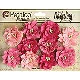 Petaloo Darjeeling Teastained Dahlia Flowers, Pink, 10-Pack