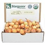 Stargazer Perennials Yellow Stuttgarter Onion Sets 8 oz | Organic Non-GMO Bulbs - Easy to Grow