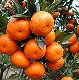 New Orange Mandarin Citrus Fruit 20+ Seeds