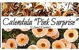 Calendula Seeds - Pink Surprise - Edible - English Marigold - Liliana's Garden