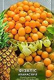 "Rare Organic vegetable Tomatillo seeds ""Physalis Pineapple"" 100 seeds."