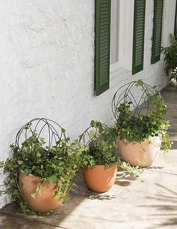 better homes and gardens topiary frames | Allframes5.org