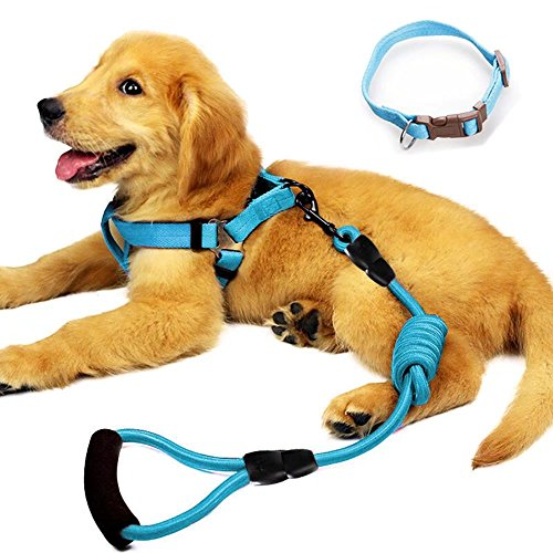 YUSENPET Dog Leash Harness Set with Collar & Heavy Duty Denim Dog Leash Collar for Small, Medium and Large Dog, Perfect for Dog Daily Training Walking Running 1