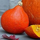 Red Kuri Squash Seeds- Open-Pollinated,Japanese kabocha Pumpkin,Organic Non-GMO