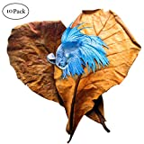 SunGrow Betta Leaves by Replicate natural habitat for betta & improve well-being - Tannin improves immunity, prevents harmful bacterial growth - Easy to use, add 1 piece per water change