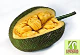 "Liveseeds - World Largest Tree Fruit-""Honey"" Jackfruit Fresh 5 Finest seeds"