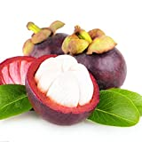 Hot Selling Gimax 50Pcs/Pack Mangosteen Seeds Tropical Sour Sweet Fruit Seeds Garden Plants Tree Bonsai